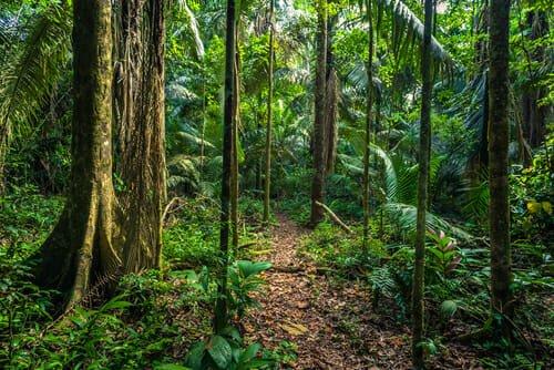 luogo con la maggiore biodiversità nel mondo