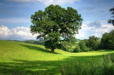 Scopriamo le differenze tra piante arboree e arbustive