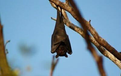 Quello che non tutti sanno sul pipistrello, un animale prezioso per l'ambiente e l'uomo