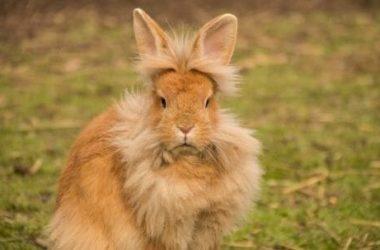 Il coniglio, un animale da compagnia da conoscere meglio