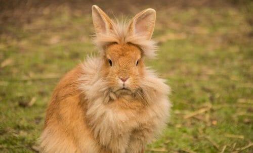 Photo of Il coniglio, un animale da compagnia da conoscere meglio