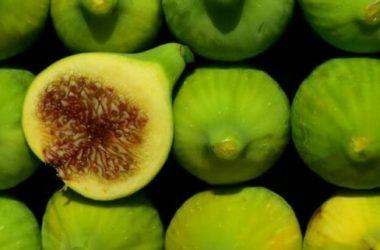 Il fico (ficus carica): la guida per conoscere e crescere questo albero da frutto