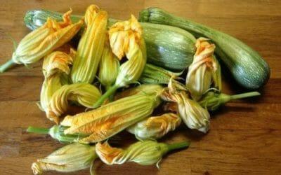 Fiori di zucca: come utilizzare questi ingredienti di piatti estivi