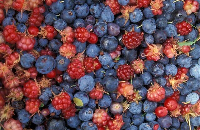 Photo of Rovo selvatico: la pianta spinosa che fa bene alla salute e ha delle dolcissime bacche