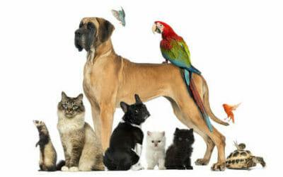 Animali domestici: quali sono, quali attenzioni e cure?