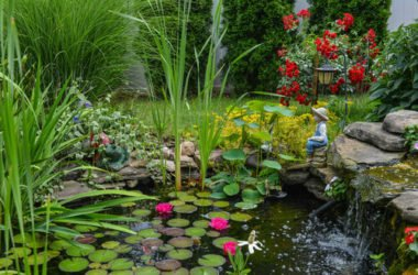 Le piante acquatiche da scoprire per un giardino davvero unico