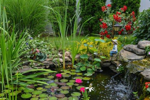 Photo of Le piante acquatiche da scoprire per un giardino davvero unico