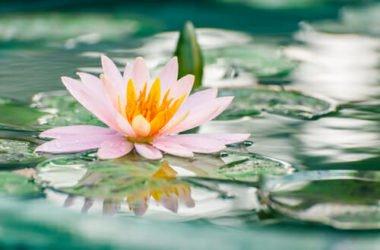 Piante galleggianti: quali sono e che cure richiedono
