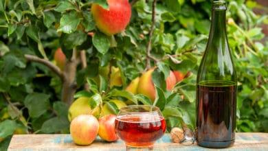 Photo of La ricetta del sidro di mele fatto in casa: una bevanda da riscoprire