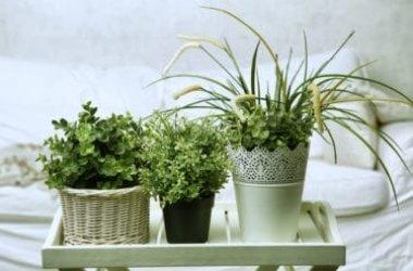 Quali sono le migliori piante da appartamento?