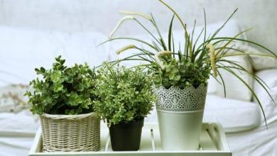 Photo of Quali sono le migliori piante da appartamento?