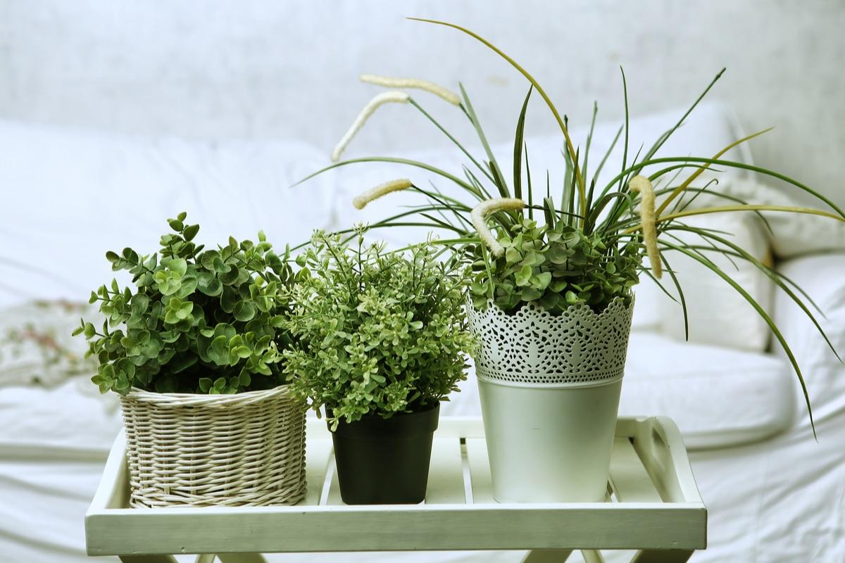 Piante Strane Da Appartamento piante da appartamento: le 8 migliori per la nostra casa