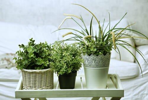 Piante Verdi Da Appartamento Facili Da Tenere.Piante Da Appartamento Le 8 Migliori Per La Nostra Casa