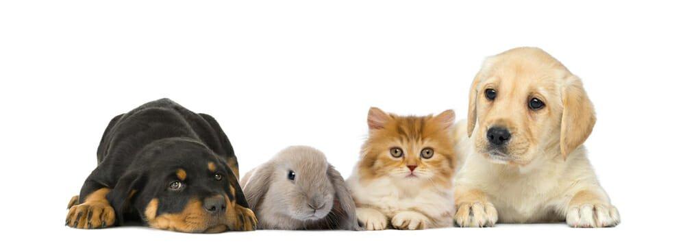 Photo of Animali domestici: quali sono, quali attenzioni e cure?