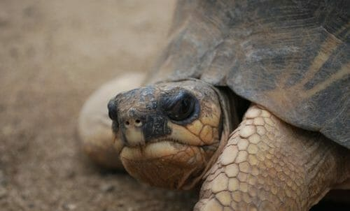 Photo of Tutto sulla tartaruga, simbolo della longevità e della lentezza
