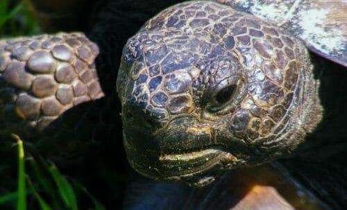 Photo of Quello che c'è da sapere sulle tartarughe di terra: le specie e le buone norme per allevarle