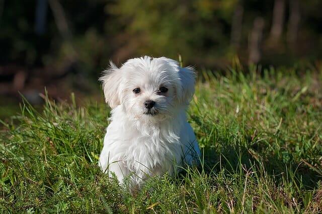 cani di piccola taglia quali sono e per chi sono adatti