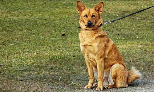 Photo of Addestramento cani: metodi, esercizi, educazione, sport