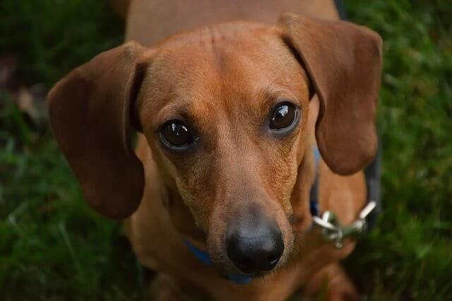 Cani di piccola taglia quali sono e per chi sono adatti for Marsupio per cani di piccola taglia