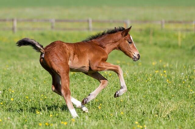 cavalli aspetto