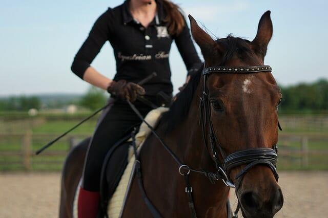 cavalli attrezzatura