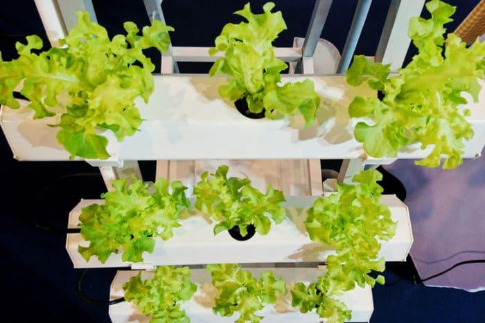 Scoprite i principi della coltivazione idroponica casalinga