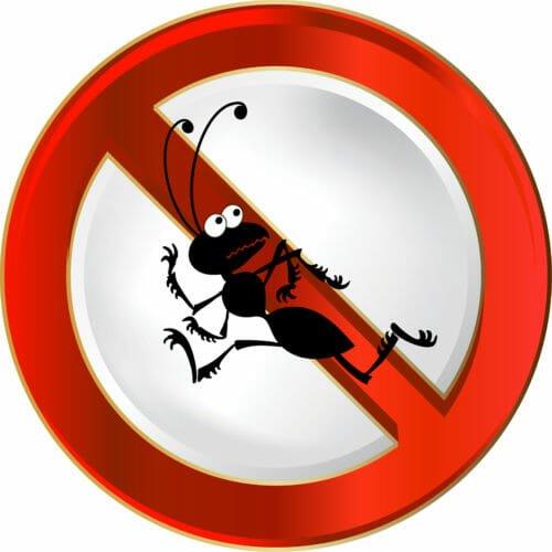 Quali sono i migliori rimedi naturali contro le formiche, in casa e in giardino