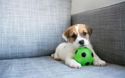 Come educare un cane: ecco le cose che un padrone non dovrebbe mai dire!