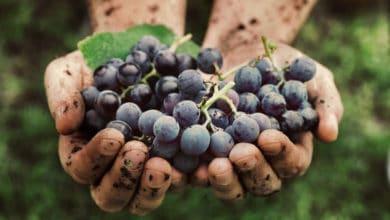 Photo of Italiani sempre più pazzi per il vino bio: raddoppiati i consumi