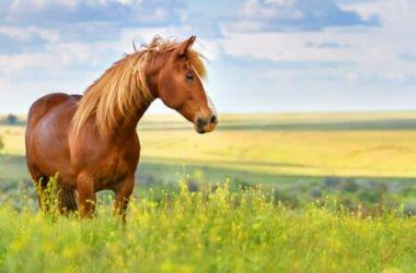 Cavalli, tutto su questi splendidi animali molto empatici e intelligenti