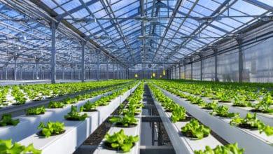 Photo of Idroponica: come fare un giardino idroponico fai da te