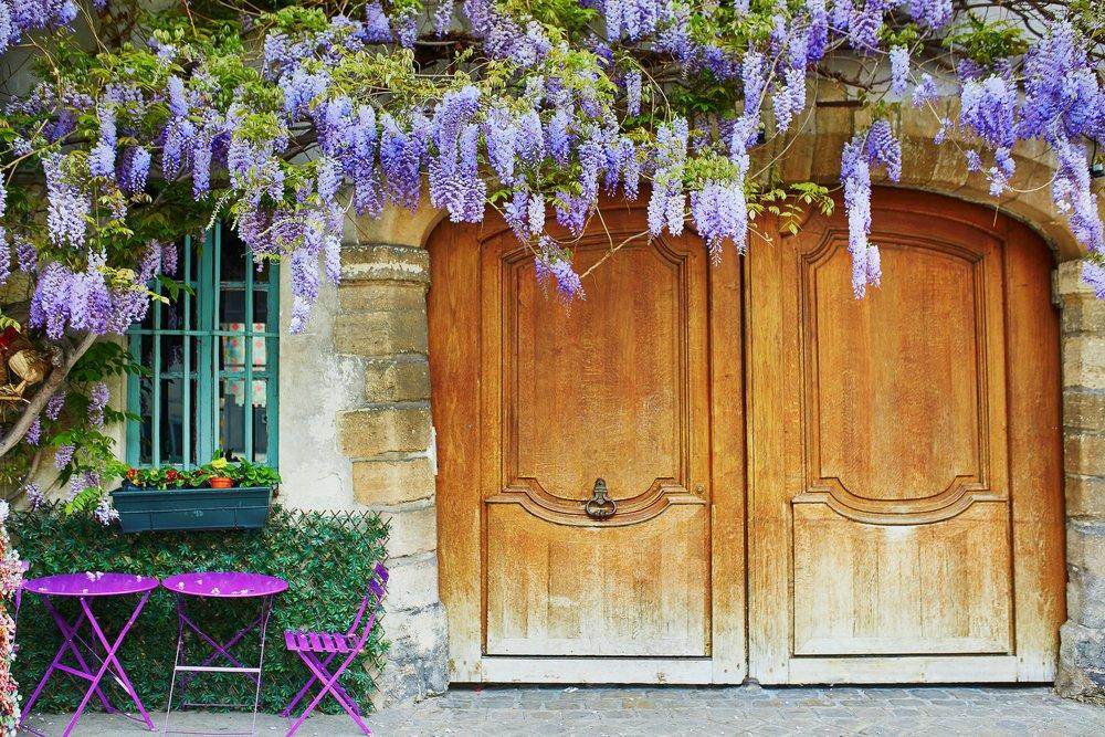 Photo of Come coltivare il glicine con successo, sia sul balcone che in giardino o in vaso