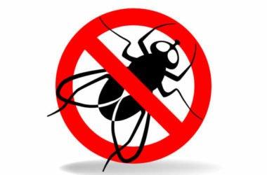 Come allontanare le mosche con metodi naturali e le piante aromatiche