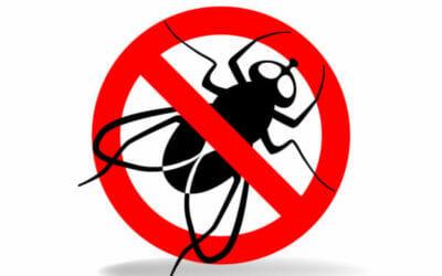Come allontanare le mosche con le piante aromatiche