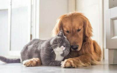 Cani e gatti: quale animale è più adatto a voi