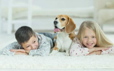 Scoprite come pulire i tappeti in modo naturale: facile ed ecologico!