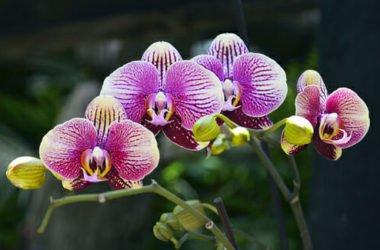 Come curare un'orchidea in casa e in balcone: consigli e idee