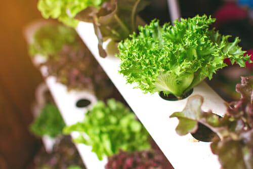 Idroponica come fare un giardino idroponico fai da te - Coltivazione idroponica in casa ...