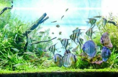 Con gli acquari ci si porta un po' di mare in casa