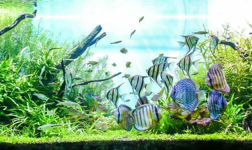 Photo of Con gli acquari ci si porta un po' di mare in casa