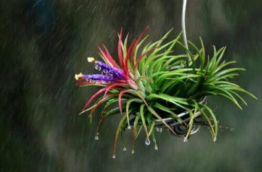 Tutto sulla Tillandsia, la pianta dell'aria: un vero e proprio portento della Natura!
