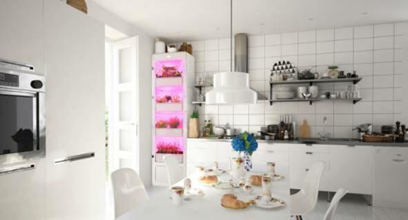 Photo of Arriva MiobiO, la serra indoor per coltivare piante ed erbe senza fatica