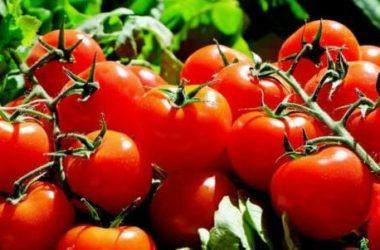 Consociazione tra ortaggi: una strategia utile per l'orto biologico perfetto