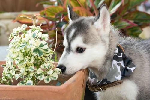Photo of Quali sono le piante velenose per i cani e come comportarsi in caso di intossicazione
