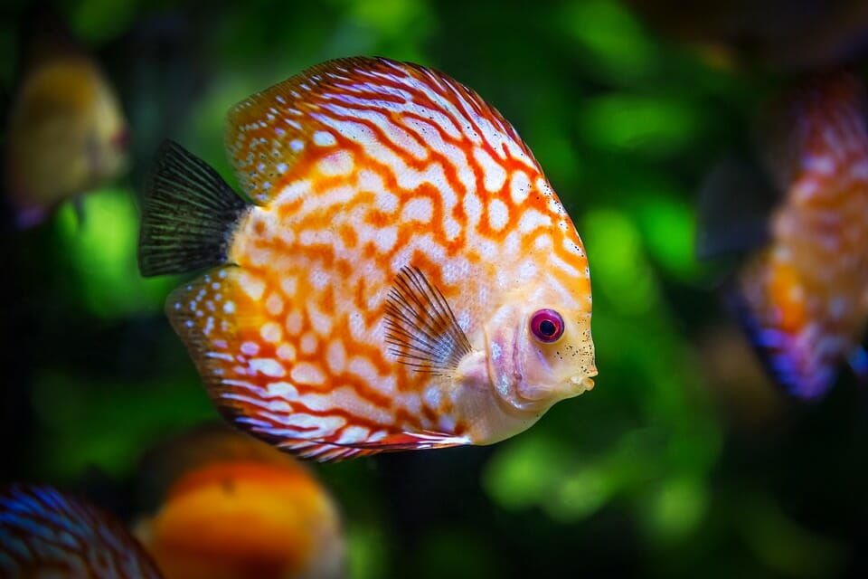 Photo of Pesci d'acqua dolce: tutto quello che c'è da sapere