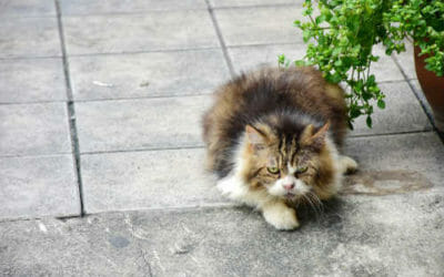 Quali sono le piante velenose per gatti, eccovi le foto per riconoscerle