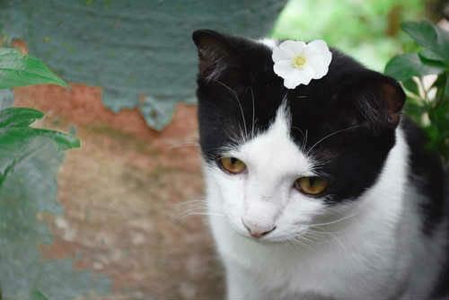 Piante Da Appartamento Tossiche Per I Gatti.Piante Velenose Per Gatti Immagini E Foto Per Riconoscerle