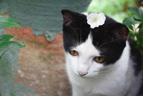 Photo of Quali sono le piante velenose per gatti, eccovi le foto per riconoscerle