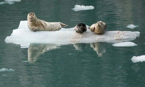 mammiferi marini
