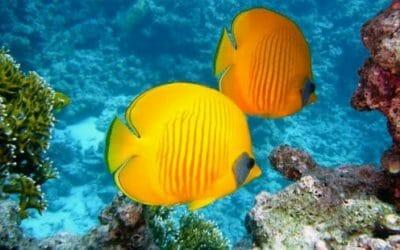 Pesci tropicali: tutto quello che c'è da sapere